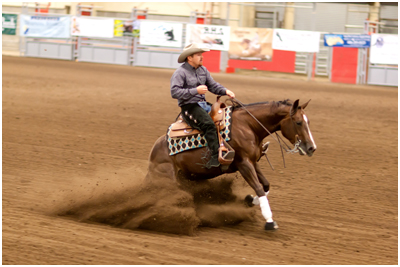 Arabian Reining mare available for sale