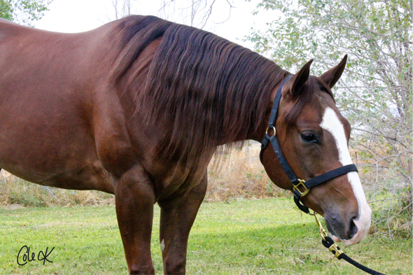 quarter horse reining horse for sale