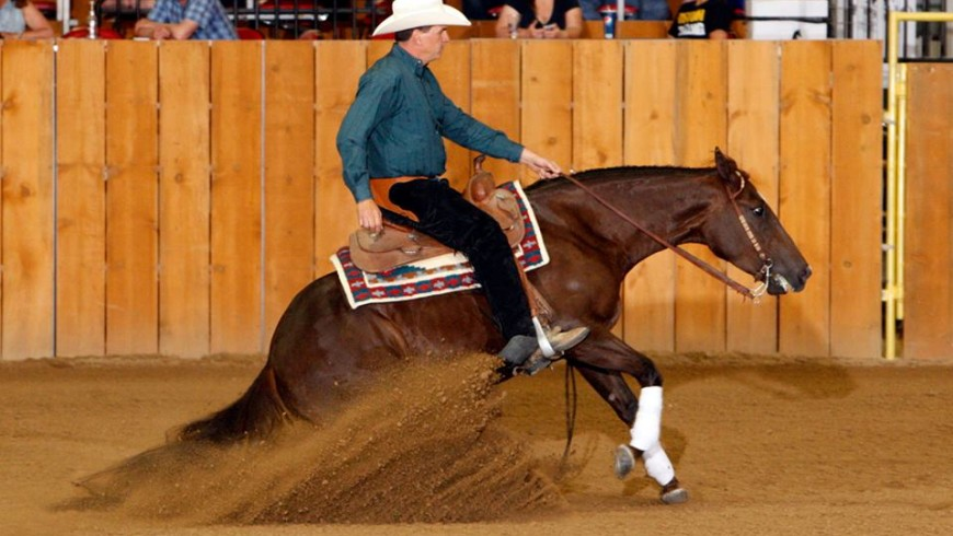 Luc McGregor Memorial Derby, Maturity & Horse Show Results