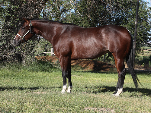quarter horse reiner for sale