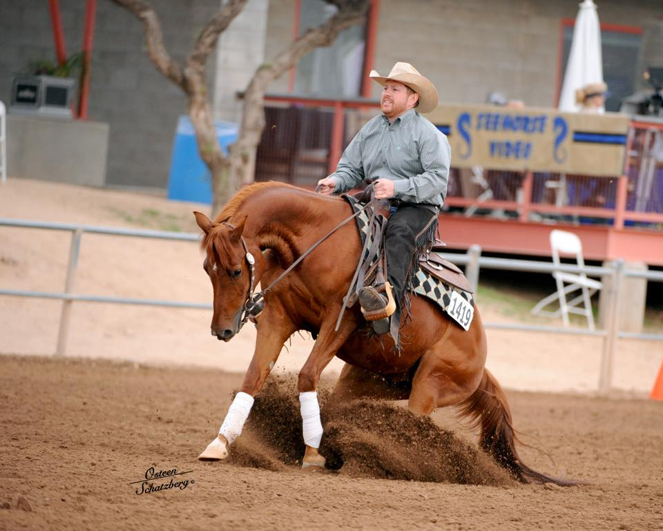 arabian reining horse for sale