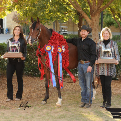 Arabian U.S. National Championship Results